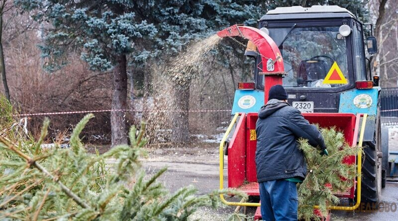 Пункт приема новогодних елок в Медведково